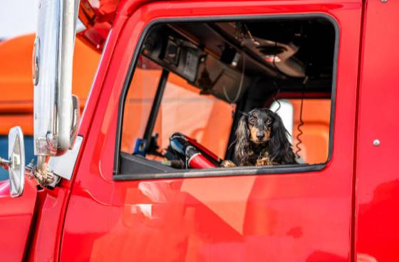 dog-sitting-in-cab